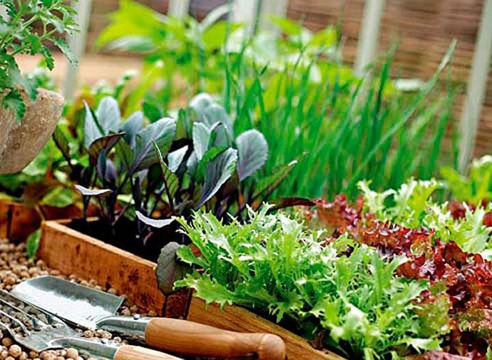 Выращивание зелени